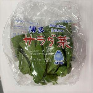 福岡産他 サラダ菜 1袋